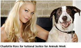Charlotte Ross For National Justice for Animals Week