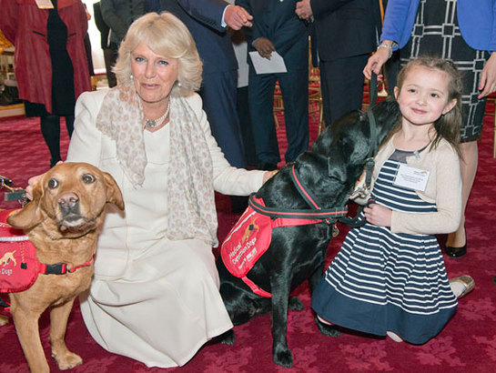 The Duchess of Cornwall at the Medical Detection Dogs Demonstration