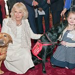 Duchess Of Cornwall Named As Patron Of Medical Detection Dogs