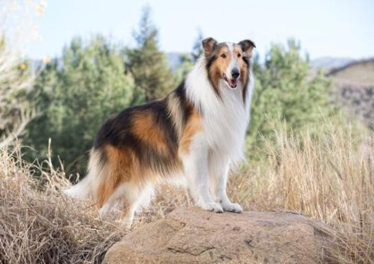 Lassie Named As Save The Children Ambassador
