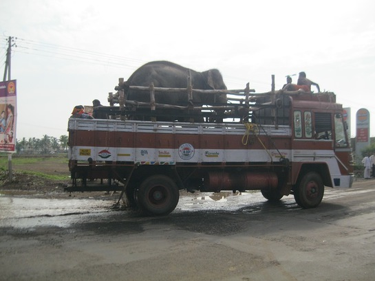 Sunder En Route To Rescue Center