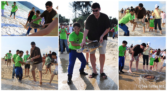 NBA Star Yao Ming saves endangered marine turtles with Sea Turtles 911