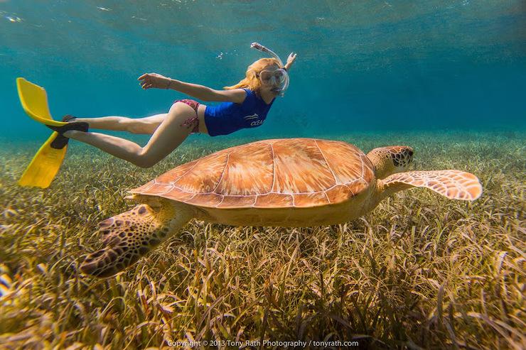 Angela Kinsey, Green Sea Turtle
