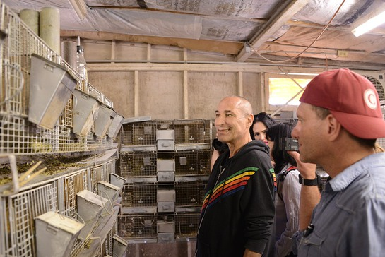 Sam Simon inspects dozens of chinchillas awaiting transport to the San Diego Humane Society and SPCA
