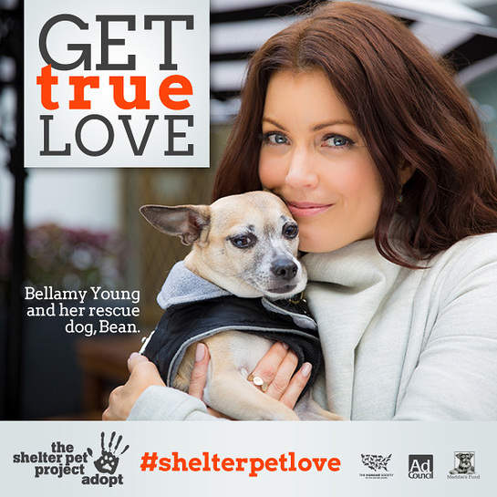 Bellamy Young's Shelter Pets Ad