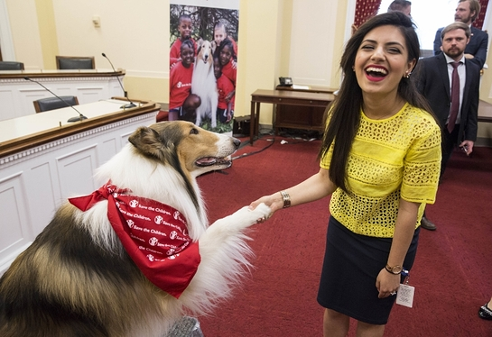 Lassie shakes paws with Sophia M. Anwar, a staffer for Rep. Brenda Lawrence