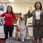 Lassie Lends A Paw In Urging Congress To Protect Kids From Disaster