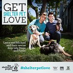 Lance Bass Stars In New Videos For The Shelter Pet Project
