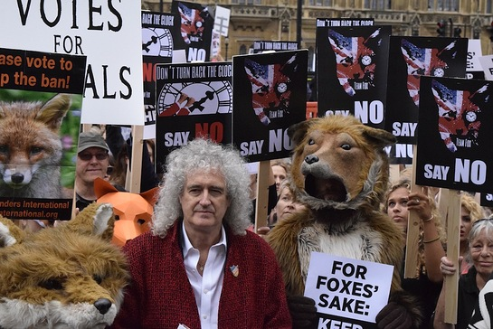 Brian May At Fox Hunting Protest