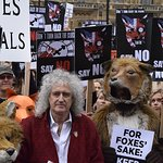 Brian May Helps Celebrate Win Against Fox Hunting