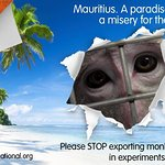 Jane Goodall Speaks Out Against Mauritius Monkey Trade