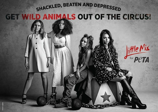 Little Mix - Get Wild Animals Out of the Circus