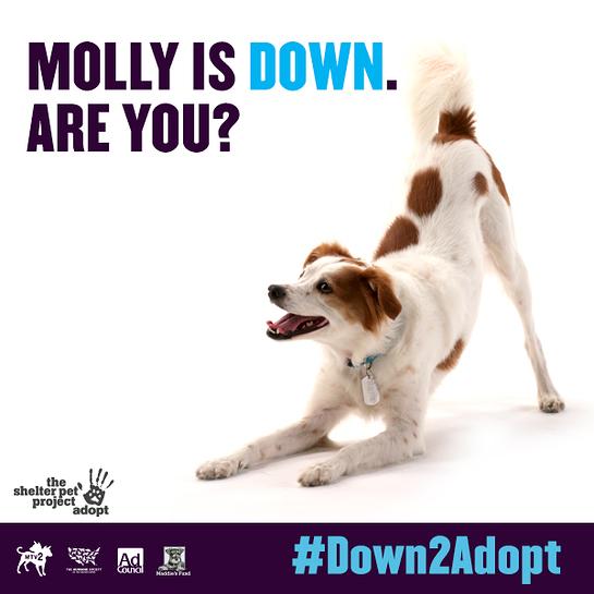 MTV2's #Down2Adopt