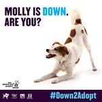 Kristen Bell Helps MTV2 Launch #Down2Adopt