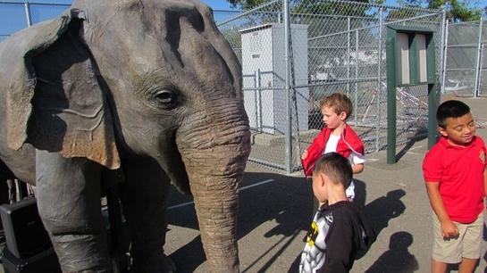 PETA's Robot Elephant